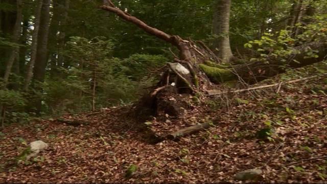 Mädchen von Baum erschlagen