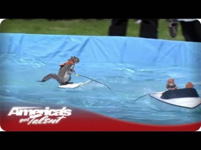 Twiggy, das wasserskifahrende Eichhörnchen, in der Show «America's Got Talent».