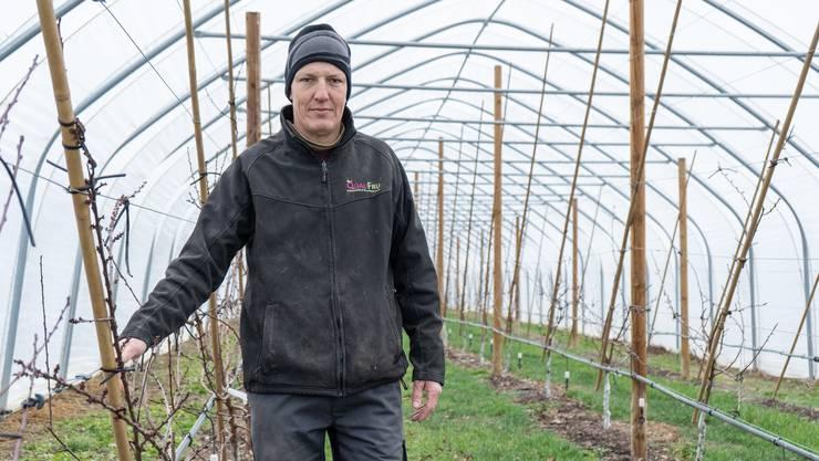 Viele der Aprikosenbäume auf einem Feld von Urs Baur in Egliswil stehen vor einer unsicheren Zukunft.