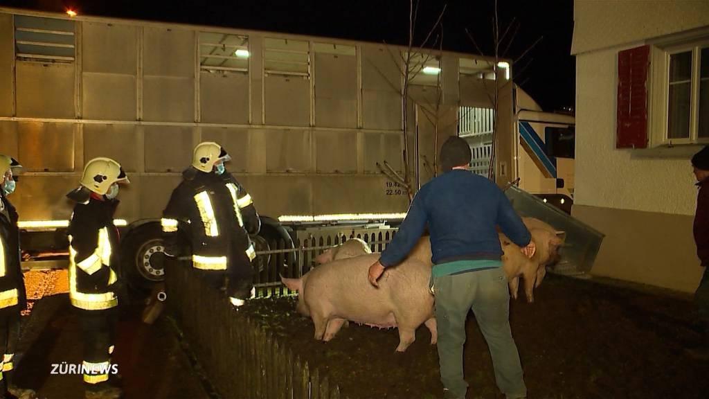 Schweinestall brennt lichterloh: 150 Tiere sterben in den Flammen