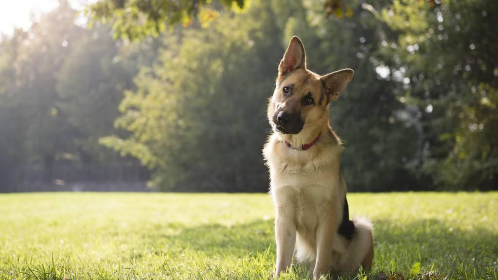 Der Hund ist der treuste Begleiter des Menschen.