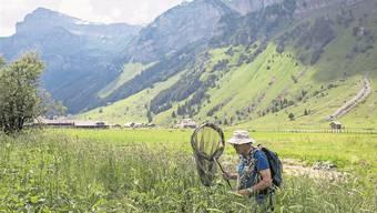 Durch mehrere Initiativen rückt der Landschaftsschutz in den Fokus. Das Bild zeigt einen Schmetterlingsforscher im Einsatz.