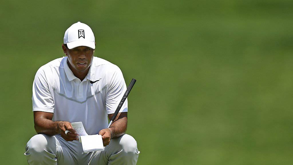 Tiger Woods ist auf den Greens wieder hoch konzentriert