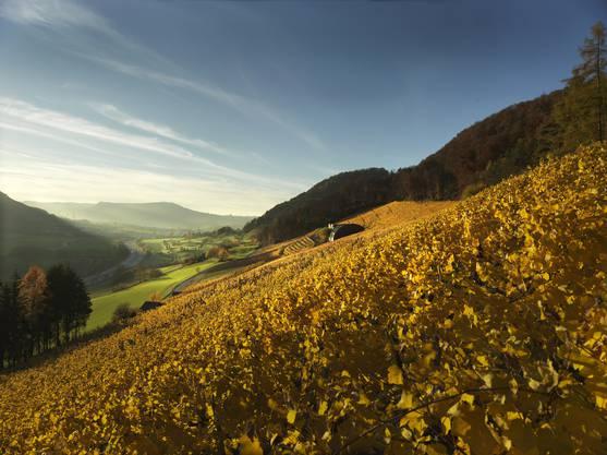 Bis zur Gründung des Kantons Aargau 1803 besass das Kloster Säckingen in Hornussen Rebberge, wo Reben und Wein für den Stift gepflegt wurden. Diese Tradition wurde wieder aufgenommen, als 1965 aus verbuschtem Weideland ein Weinberg geschaffen wurde – mit der Lagebezeichnung Stiftshalde. Die Steillage ist, mit Wohnhaus und Kellerei, direkt nach Süden ausgerichtet. Die leichte Muldenlage, oben durch den Wald begrenzt, bildet ideale Voraussetzungen für ein warmes Mikroklima. Über 50-jährige Blauburgunder und Pinot-Gris-Stöcke bilden die Grundlage für extraktreiche Spezialitäten. In Sachen Weisswein werden über ein Dutzend Sorten angebaut. Seit über 20 Jahren pflegen Erika und Daniel Fürst die Reben und den Wein in der Stiftshalde. 2016 konnten sie ihren neuen Weinkeller einweihen. Die Verwirklichung, mitten im Rebberg die Kundschaft zu bedienen, ist ihr grosser Stolz.