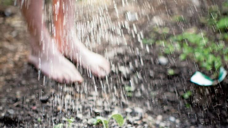 Den eigenen Garten abschreiten und dabei Pflanzenleben retten, das ist Tränken.
