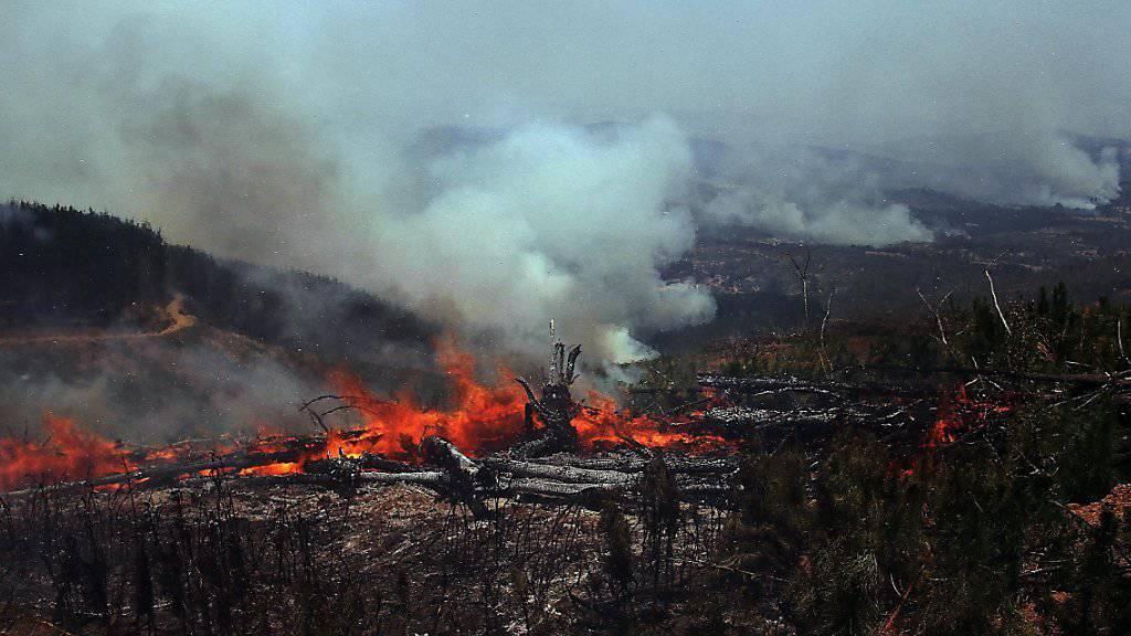 """""""Grösste Waldkatastrophe der chilenischen Geschichte"""": Flammen in Cauquenes zerstören 40 Weingüter."""