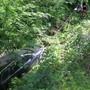 In Läufelfingen musste das Unfallauto des betrunkenen Lenkers aus dem Wald geborgen werden.