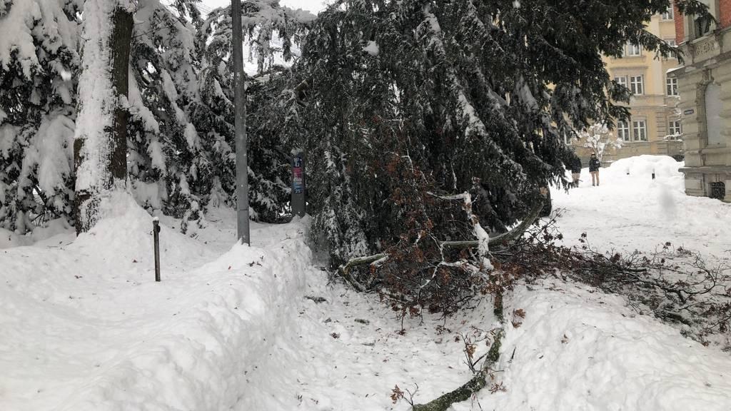 Polizei warnt vor abbrechenden Ästen und umstürzenden Bäumen