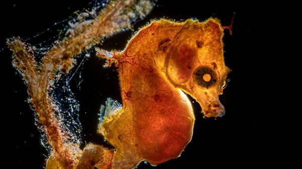 Spektakuläre Unterwasser-Aufnahmen des «Ocean Art Contest»