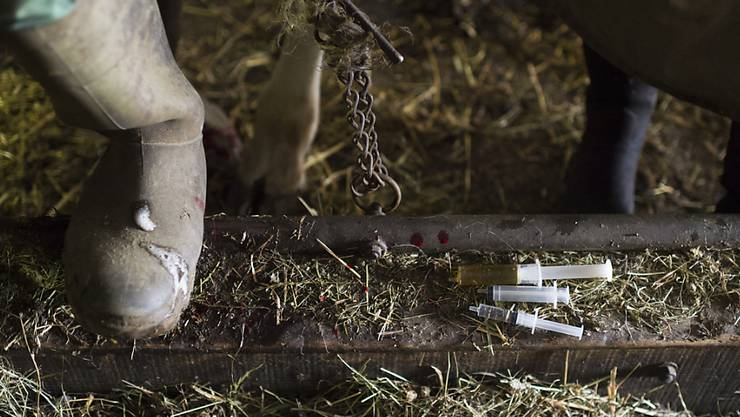 Spritzen mit Antibiotika und homöopathischen Arzneimitteln auf dem Boden eines Kuhstalls. (Archiv)