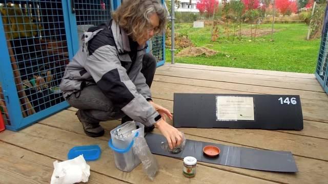 Igelbeobachtung beim Verein Stadtwildtiere: Zoologin Claudia Kistler hat das Projekt begleitet. Sie arbeitet für die unabhängige Forschungs- und Beratungsgemeinschaft SWILD