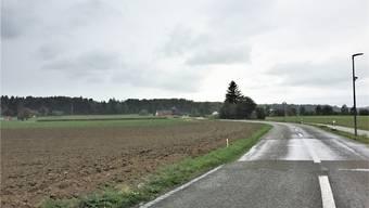 Führt eine Verbreiterung der Strecke zu Kollisionen zwischen Auto und Tier? Ces