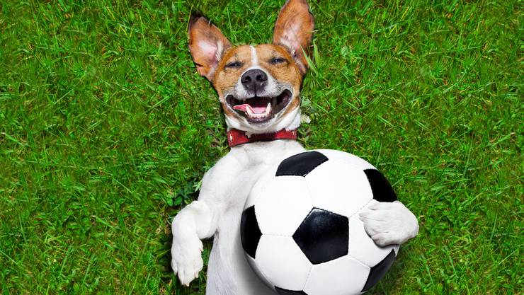 Lustige Fussball Hund
