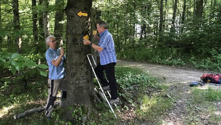Louis Meier (links) und Hans Belser (rechts) sorgen dafür, dass sich auf den 185 Kilometern Wanderwegen im Niederamt niemand verirrt.