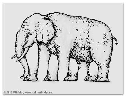 Wie viele Beine hat der Elefant?