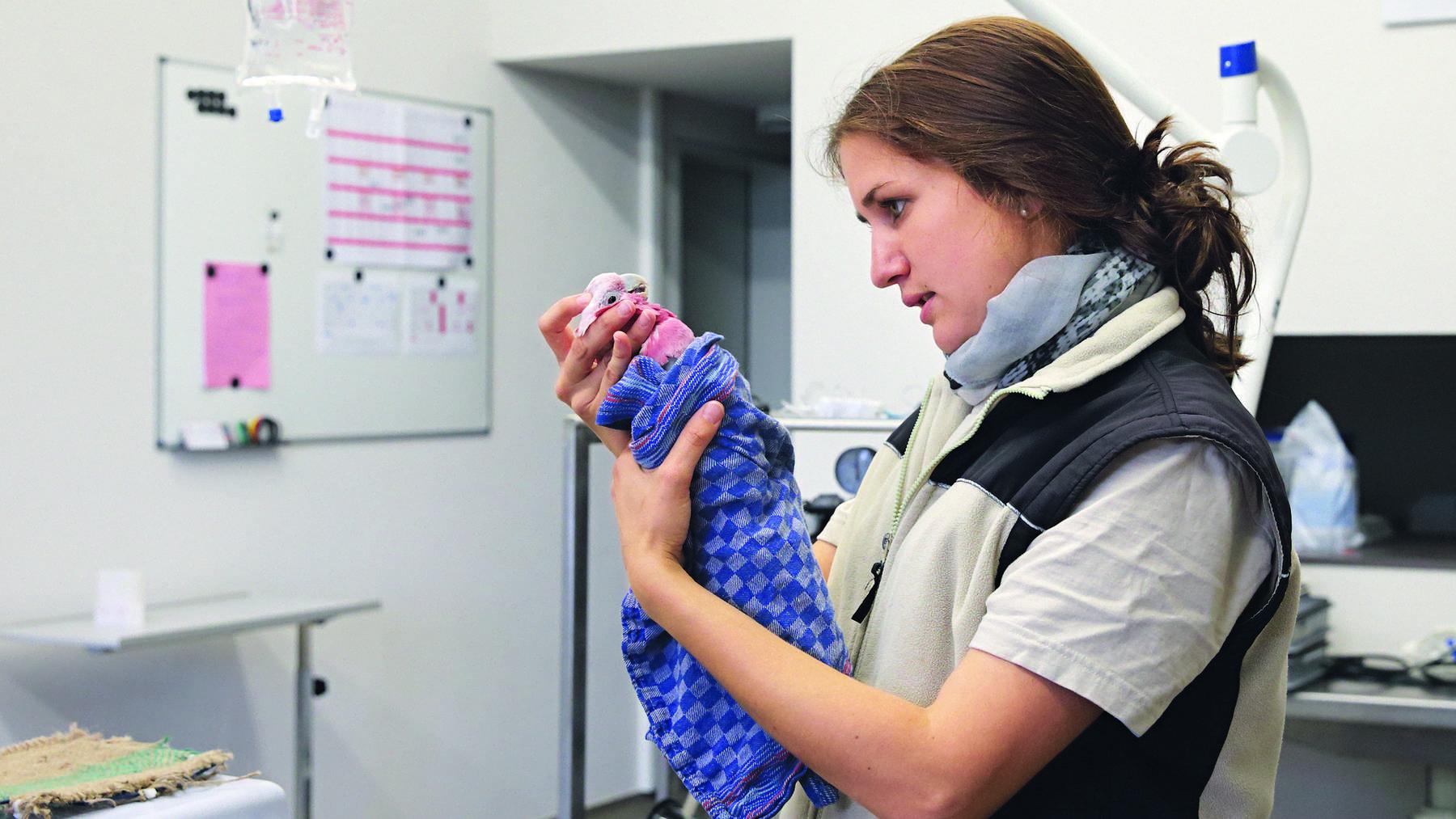Karin Federer ist künftig nicht nur Zootierärztin, sondern auch Zoodirektorin