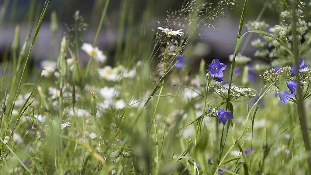 Die Hochsaison der Pollen ist eröffnet - in diesem Jahr mit etwas Verspätung. (Archivbild)