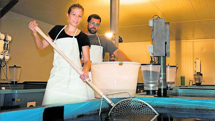 Judith Häseli und Simon Bachofer bewirtschaften die Zanderzuchtanlage.