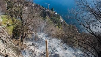 In diesem Waldstück oberhalb von Ascona wüteten die Flammen. Die Tessiner Gemeinde kam im Vergleich zum italienischen Valle Vigezzo relativ glimpflich davon. Dort dauerten die Löscharbeiten am Donnerstag noch an.