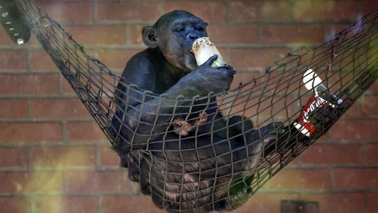 Diesem Affen gefällts: Das süsse Nichtstun.