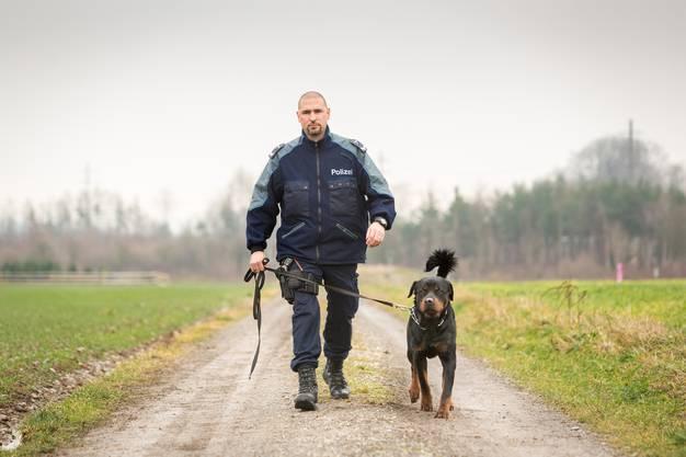 17 Monate alt ist der Rottweiler Gysmo mit vollem Zuchtname Gysmo vom Holzbrünneli. Sein Herrchen ist Wachtmeister Niedermann von der Polizei rechtes Limmattal. Er bildet Gysmo zum Polizeihund aus. Aufgenommen am 20. Dezember 2017 in Weiningen.
