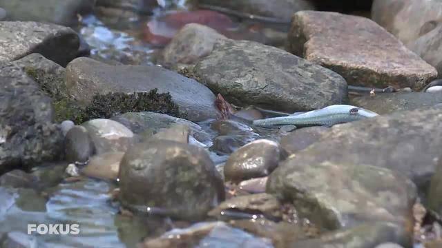 Mysteriöses Massen-Fischsterben