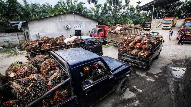 Transport von Früchten der Ölpalme in Indonesien. (Symbolbild)