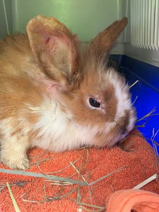 Einige der Kaninchen mussten wegen ihrem schlechten gesundheitlichen Zustand eingeschläfert werden. Nun bittet die Kantonspolizei Zürich die Bevölkerung um Hilfe.