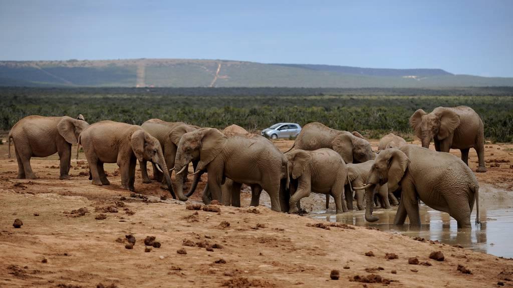 Matthias Steuri über die Tierwelt in Südafrika