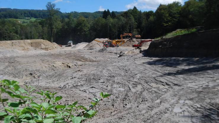 Das zwei Hektaren grosse Auen- und Gewässerprojekt Hegnau an der Reuss