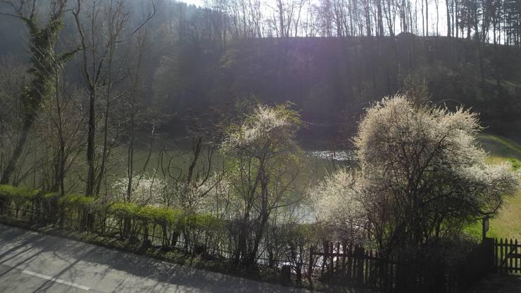 Baslerweiher in Seewen
