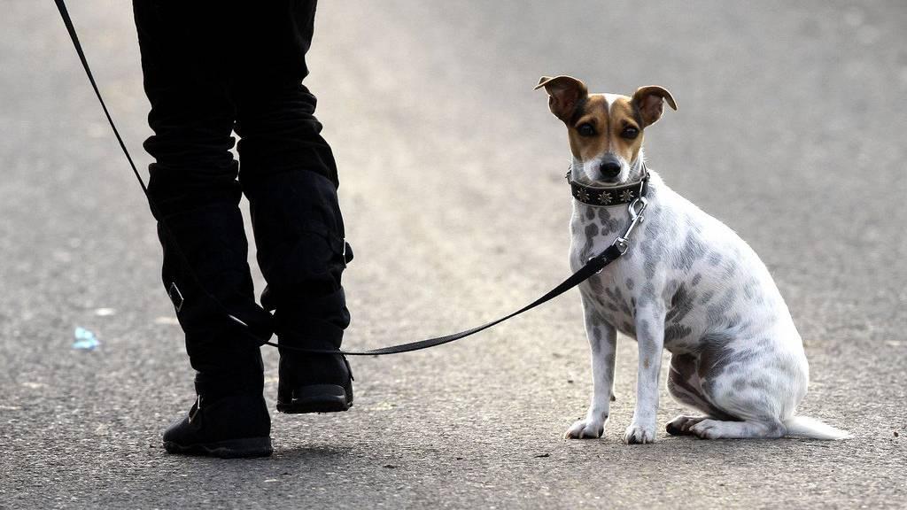 Hunde müssen in Wil noch nicht an die Leine.