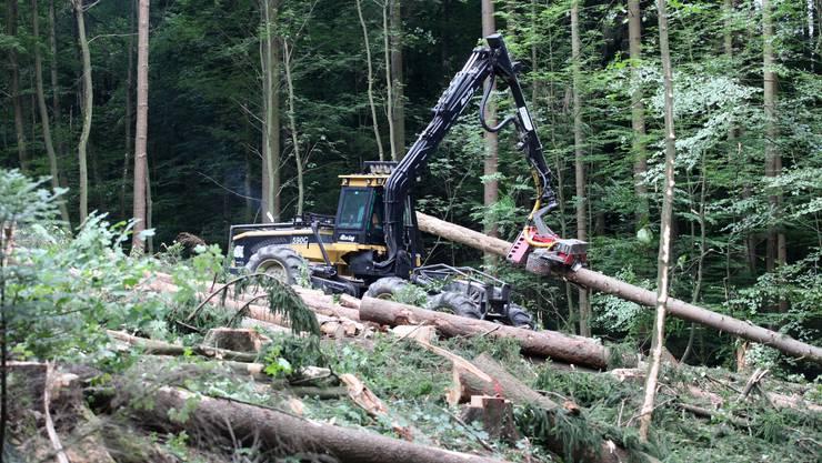 Ein grösserer Forstbetrieb verfügt über eine stärkere Verhandlungsposition.