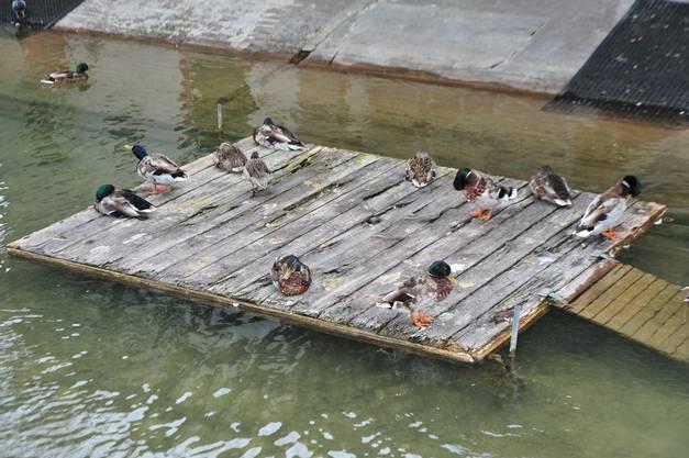 Die Plattformen für die Enten sind in einem schlechten Zustand