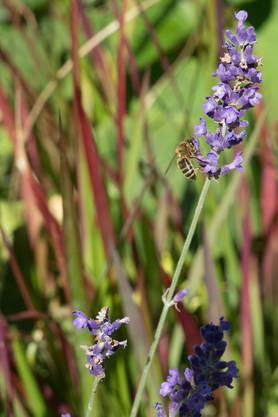 Bienen freuen sich über die vielfältige Pflanzenwelt