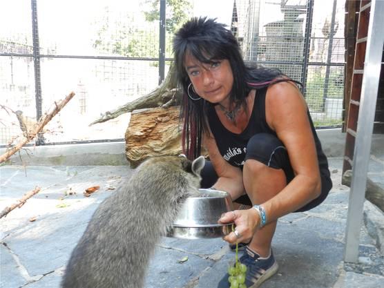 Tierpflegerin Kira Bosshardt bei der Fütterung eines Waschbären.