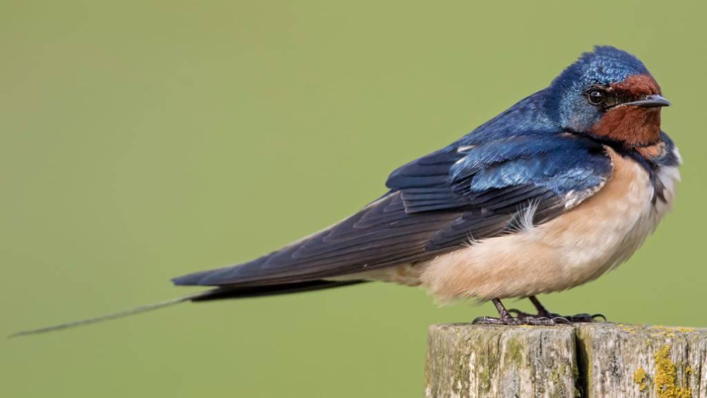 Zugvögel auf der Westroute kommen früher nach Europa