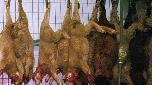 Nach vorheriger Betäubung geschächtete Schafe in einem Schweizer Schlachthof (Symbolbild)