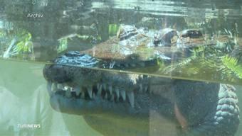Bei Reinigungsarbeiten hat ein Krokodil im Zoo Zürich eine Tierpflegerin in die Hand gebissen. Das Tier wollte anschliessend nicht mehr loslassen und den Mitarbeitern blieb nichts anderes übrig, als es zu erschiessen. Die Pflegerin ist noch immer im Spital.
