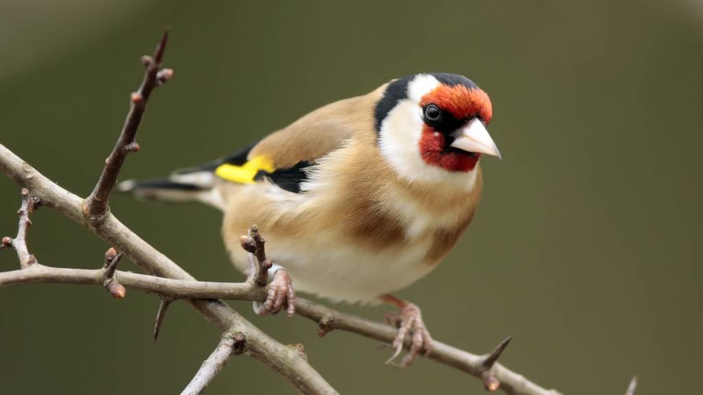 Tierquäler lockt Vögel in brutale Leim-Falle
