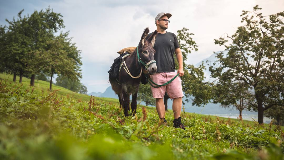 Zwei Esel im Aargau