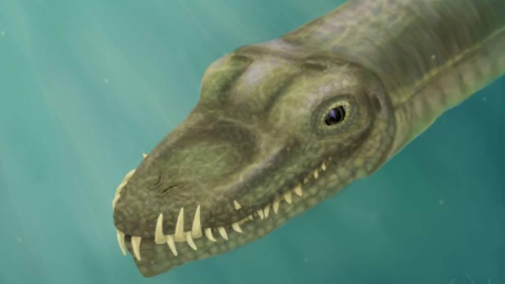 Studie: Skurriles Reptil mit Giraffenhals lebte im Wasser