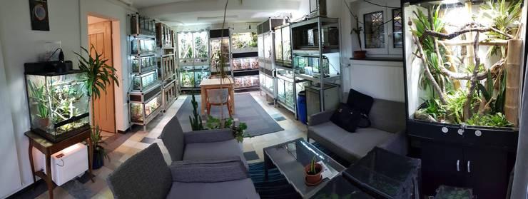 In den Terrarien von Pierre Toscano in Laufen leben neun Taggecko-Pärchen, mit denen er züchtet.