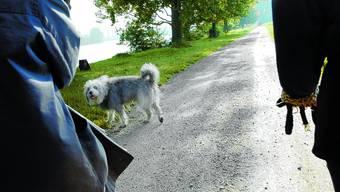 Vorreiter: Mit dem neuen Hundehaltungsreglement nimmt Selzach eine Pionierrolle im Kanton ein.