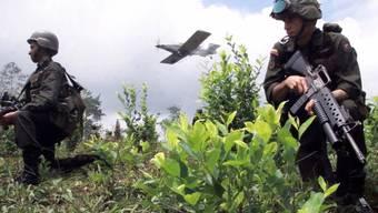 Bekämpfung des Koka-Anbaus in Kolumbien (Archiv)