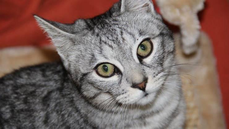 Katze im TbB-Tierheim
