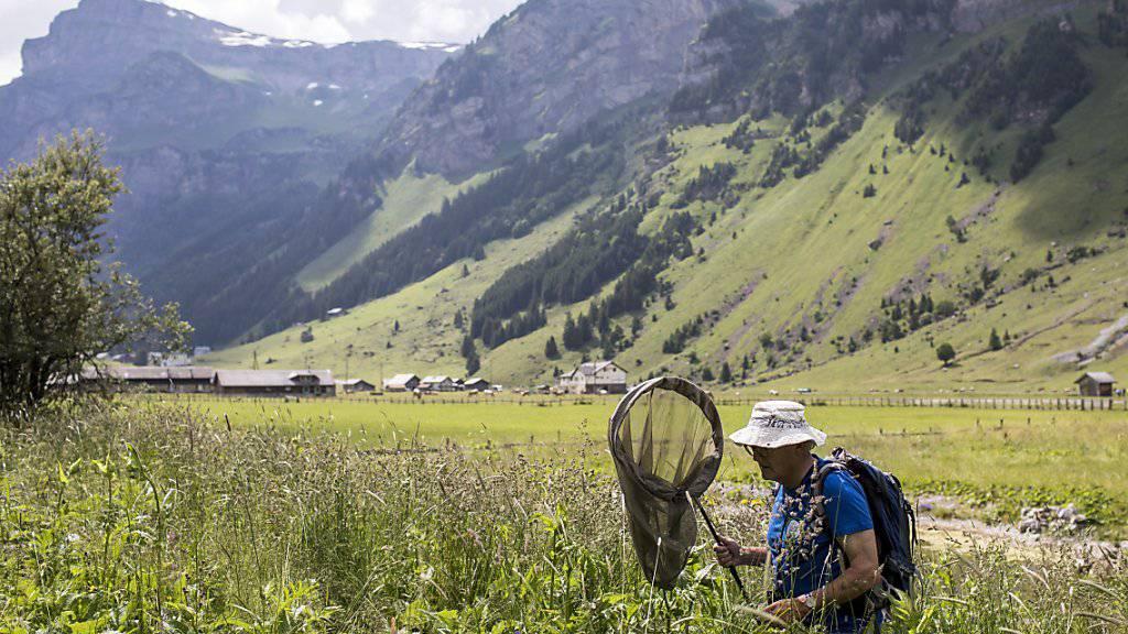 Ein Schmetterlingsforscher auf der Suche nach Schmetterlingen in Urnenboden. Mit zwei Volksinitiativen wollen Umweltverbände gegen das Schwinden der Artenvielfalt und die Verbauung der Landschaft vorgehen. (Archiv)