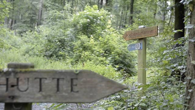 Fislisbach: In diesem Waldstück geschah das Tötungsdelikt