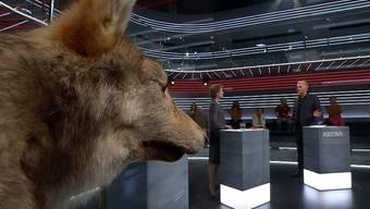 Beim revidierten Jagdgesetz geht es um den Wolf, aber eben nicht nur.