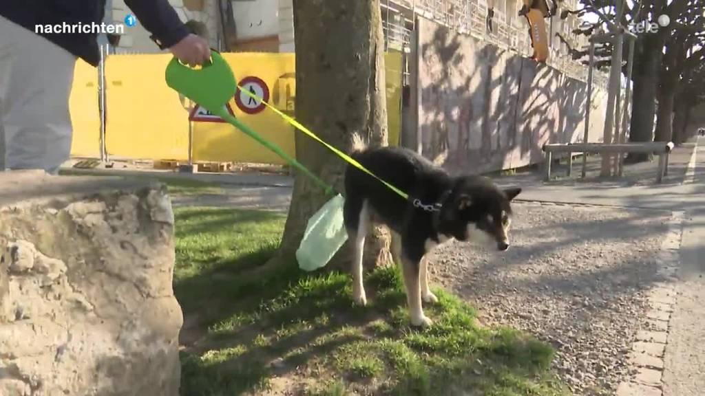 Neue Erfindung erleichtert das Leben von Hundehaltern